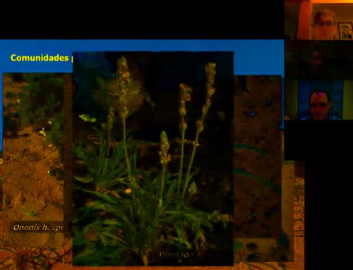 Casi un centenar de personas asisten de forma virtual a la tertulia 'De flor en flor por la isla de los Volcanes'