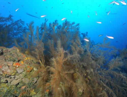 Lanzarote tiene bosques y están bajo el mar. Reserva de la Biosfera de Lanzarote.